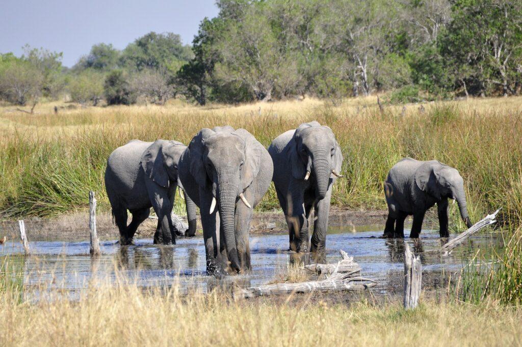 turismo sur africa
